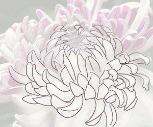 drawing flowers, outline drawing – H South, Photo (cc) Keith Pheanix
