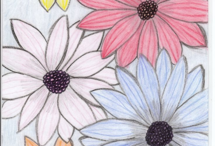 flower drawings | flowers for flower lovers.: flowers drawing.