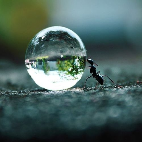 The Ant's Dream! by Rakesh Rocky: 500px.com/… #Photography #Ant