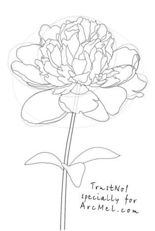 How To Draw Flowers – diy Thought