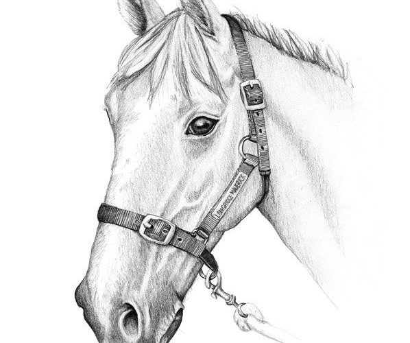 Pencil Drawings of horses