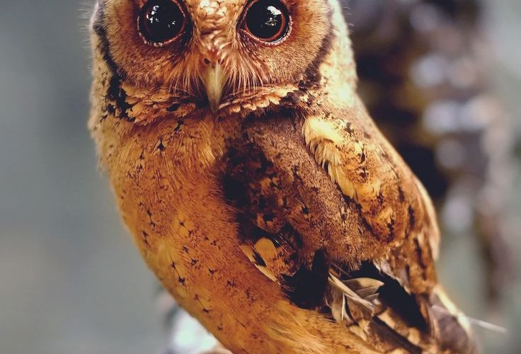 """Wild at Heart by Sham Jolimie on 500px """"Owls may be cute but they are not meant …"""
