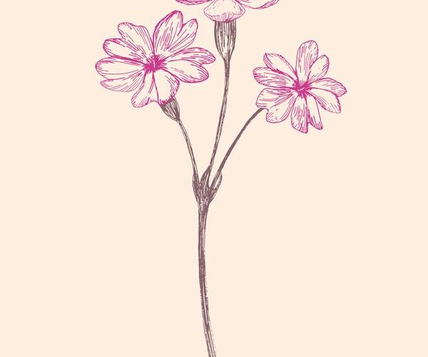Wild flowers illustration Project  PRIMROSE by JUNG SOO CHAE, via Behance