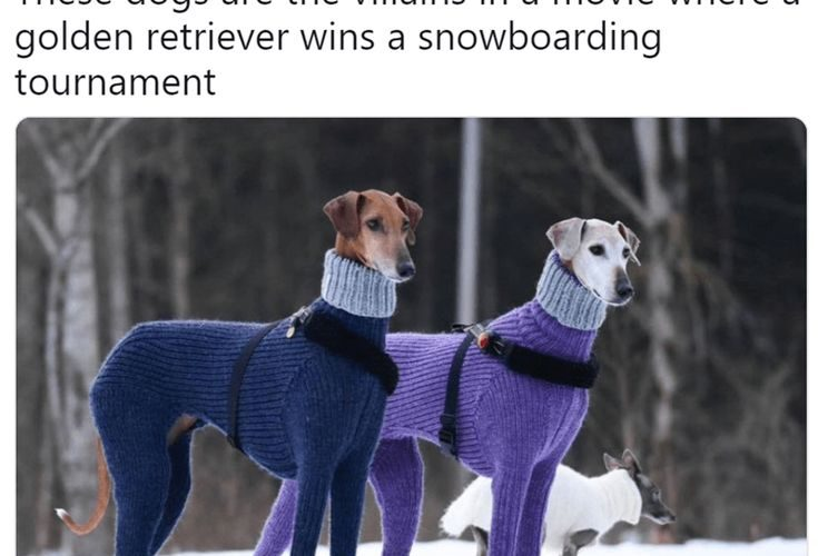 A photo of two hortaya borzaya dogs in matching turtlenecks has inspired funny c…