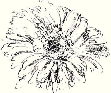 Make Your Flower Drawings Blossom with These Tips: Sketch Flowers in Outline