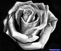 How to Draw a Rose In Pencil, Draw a Realistic Rose, Step by Step, Flowers, Pop …