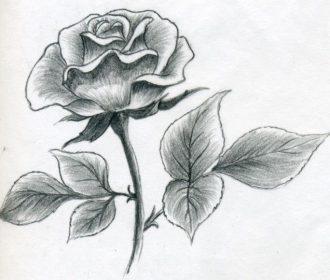 Rose Drawings | Rose by ~evenineedlove on deviantART