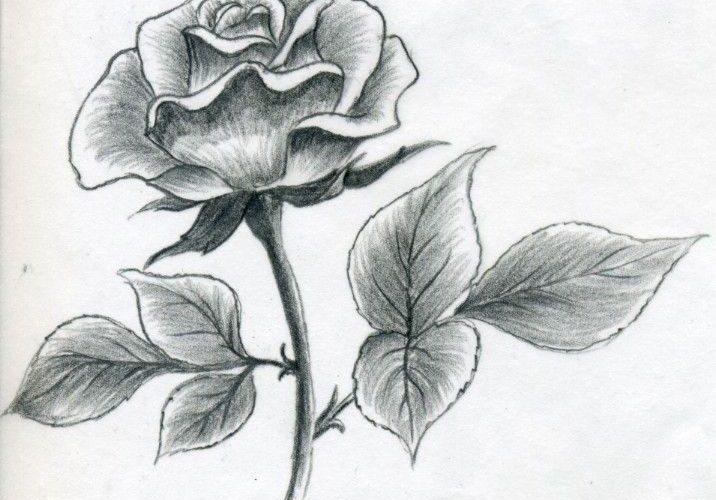 Rose Drawings   Rose by ~evenineedlove on deviantART