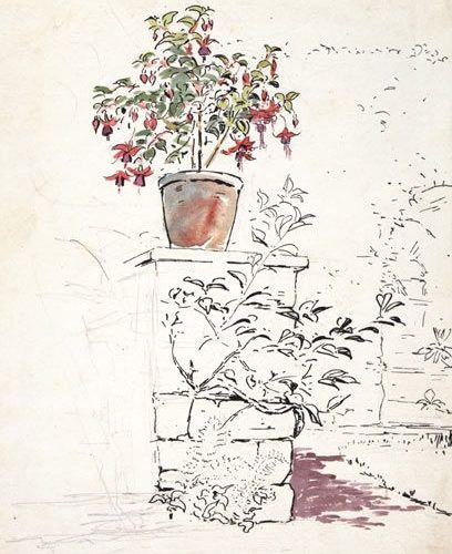 Sketch of a potted fuschia at Fawe park 1903 by Beatrix Potter: Place as Inspira…