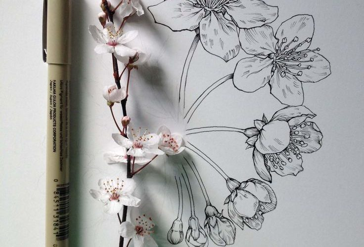 The art of botany: how to draw flowers, plants & nature better – Digital Arts