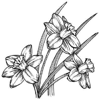 To draw a daffodil, examine the drawing of a daffodil before proceeding to step …