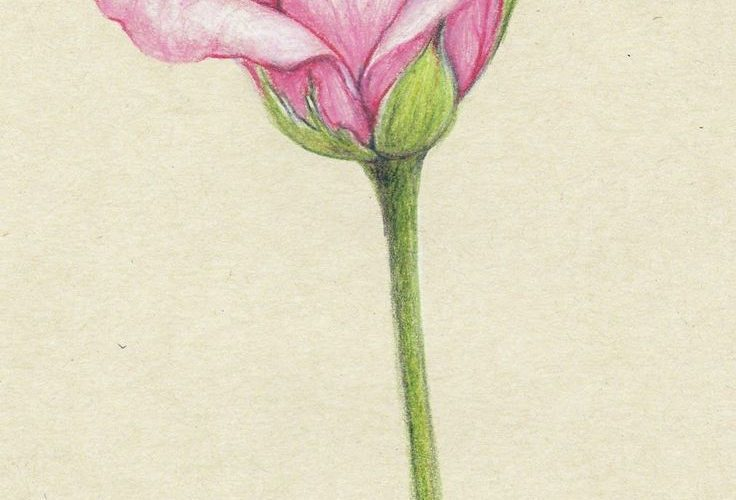 drawings of flowers – Google Search                                             …