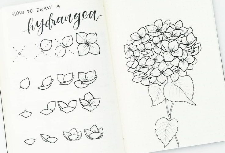 How to draw hydrangea flowers. On the left,  i break down the steps to drawing t…