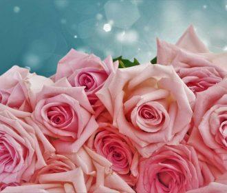 US Seller- artwork prints for sale rose flower botanical artwork poster