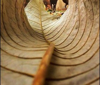 Deer from the perspective of the leaf. I like this photo because it is shot from…