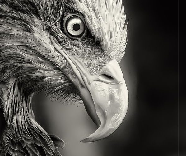 Eagles are the peak killer of the food cycle. They are furnished with tough talo…