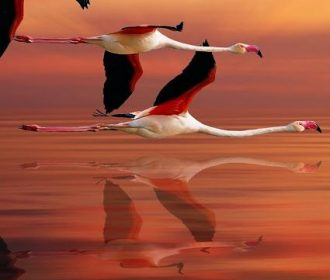 """#flamingoes at #sunset """"C'mon, guys! Doesn't this beat standing around on somebo…"""