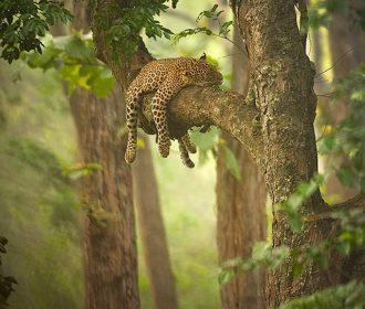 35 Examples of Inspirational Wildlife Photography – Speckyboy Design Magazine