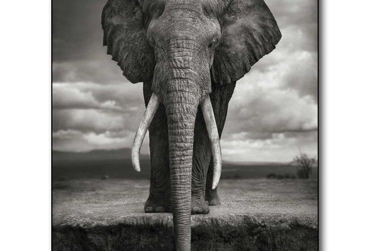 Elephant Art Silk Fabric Poster Print