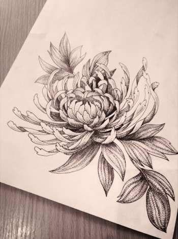 sketches, Chrysanthemum, tattoo