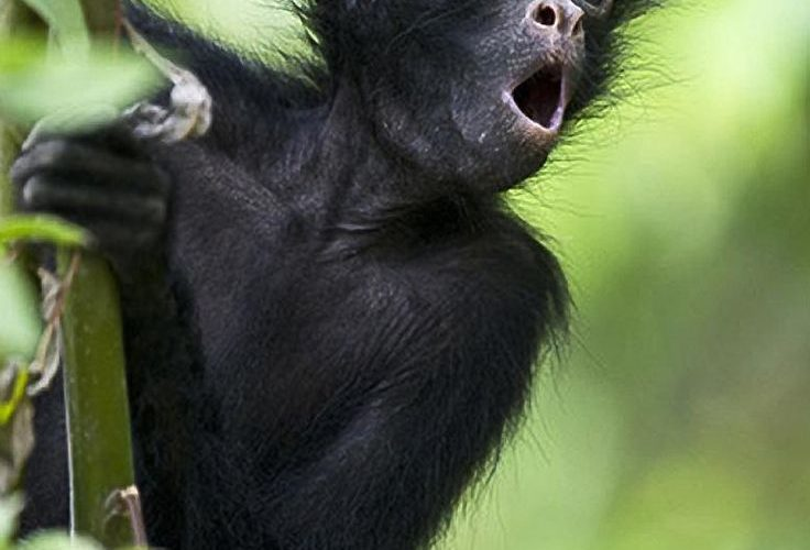 Young Spider Monkey in a Bolivian Rescue Cente by Roy… dont like monkeys gener…