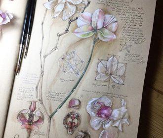 Botanical drawings on toned paper. #botanical #art #illustration #nature #journa…