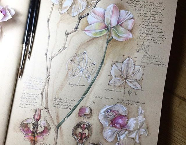 Botanical drawings on toned paper. #botanical #art #illustration #nature #journa…