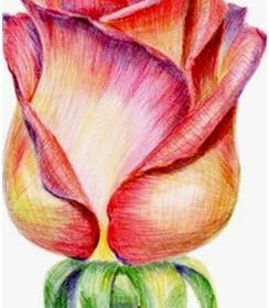 Create Colored Pencil Still Life Drawings, Landscapes, Portraits and More – Lear…