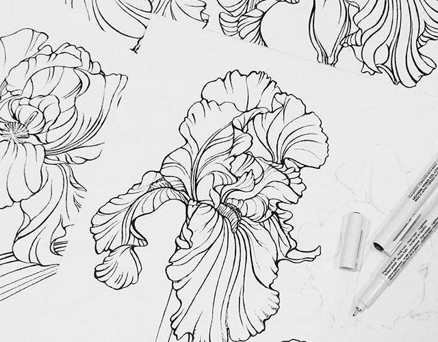#iris #flowers #botanical #sketch #workinprogress