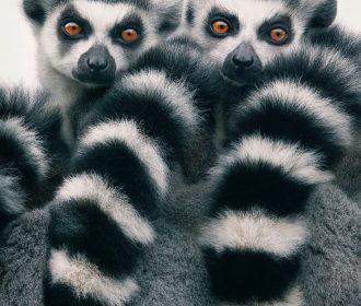 Magnificent Wild Animals Portrait Photography by Tim Flach #photography #wildlif…