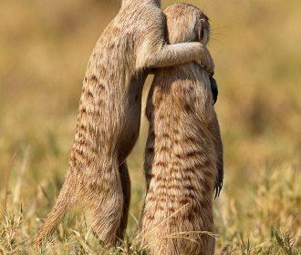 wildlife photography animaloff