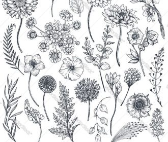 Collection of hand drawn flowers and plants. Monochrome vector illustrations in …