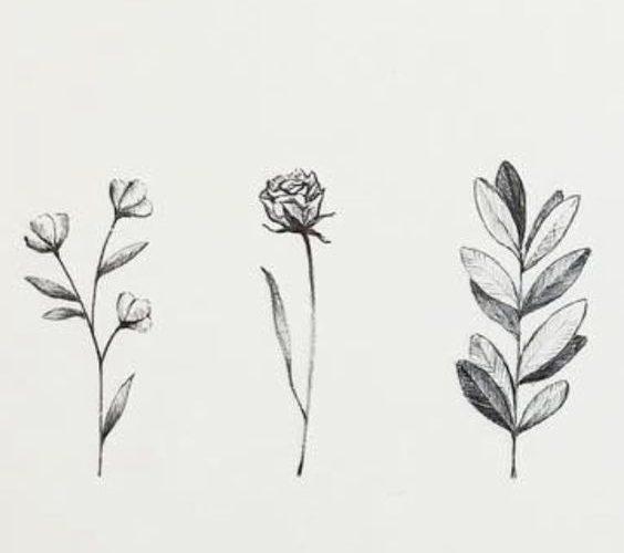 floral sketch design. minimal flower drawing.