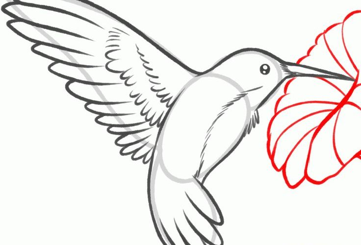 How to Draw a Hummingbird and Flower, Step by Step, Birds, Animals …