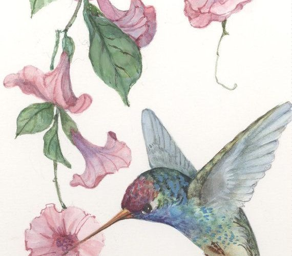 Image result for sketches of hummingbirds with flowers