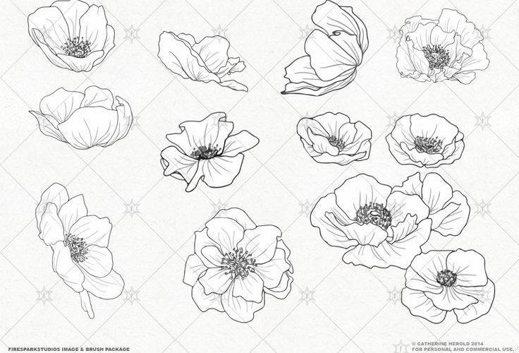 VECTOR Poppy Blossoms Illustrations by Fire Spark Studios on Creative Market