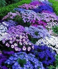 10 low-maintenance perennials for the busy gardener! You can still have beautifu…
