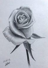 Best Flowers Sketch Cas 46 Ideas