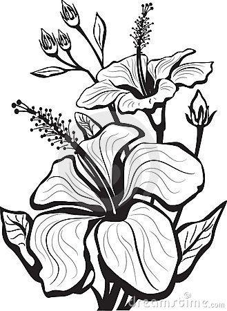 Hibiscus Royalty Free Stock Photo – Image: 8754095