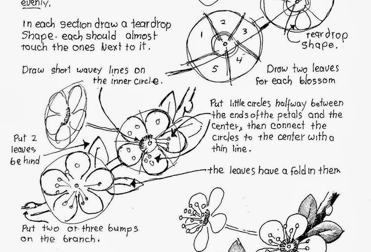 How To Draw Cherry Blossoms, Free Drawing Worksheet