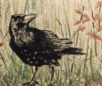 Beautiful Crow ACEO Original Watercolor Pencil Art Card Signed By Artist On Back