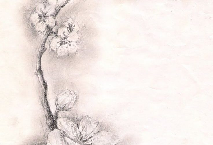cherry blossom tattoo sketch | … – DRACONES TATTOO- salon tatuaje bucuresti: S…