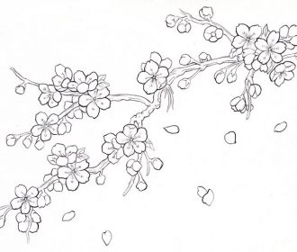 Cherry Blossom Drawing Outline Cherry blossom Photo & Picture Gallery – Picturem…