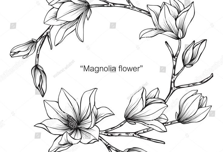 Wreath Magnolia flower drawing and sketch with black and white line-art.