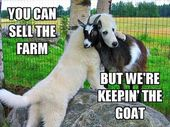 BEST 35 FUNNY ANIMAL PICTURES #funny #humor