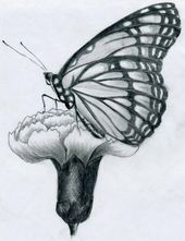 sketches to copy | You have probably learned already the basic butterfly drawing…