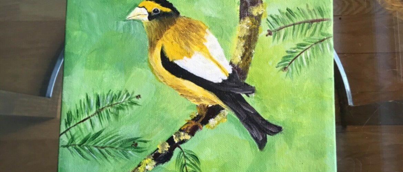 Original Acrylic Painting of Evening Grosbeak 8 X 8 By Local Artist