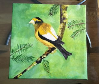 Original Acrylic Painting of Evening Grosbeak 8 X 8 By Local Artist