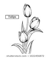 Hand Drawn Illustration Sketch Tulips Flower Stock Vector (Royalty Free) 1317470…