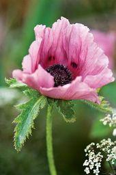 Photos of English garden designer Sarah Price's gardens, including her 2007 …